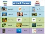 Animal-Classes26