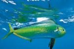 Dolphin15