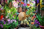 Orchid-Show21
