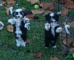 Puppies-too-funny