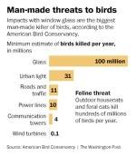 bird-death26