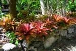 bromeliad15