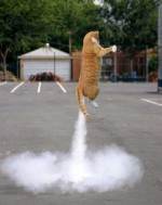 cat-fart12