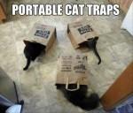 cat-trap19