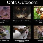cats-outdoors16