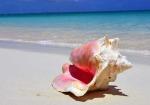 conch-shell-beach16