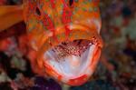 coral-fish-collaborate-01-600x399