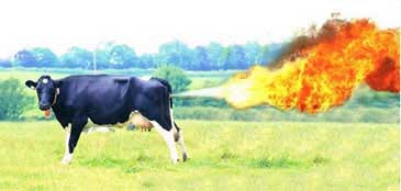 cow-fart