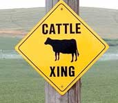 cow_sign