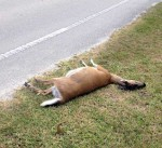 dead-deer17