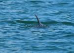 dolphin-fin00