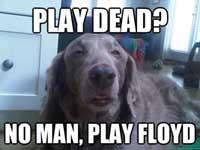 drug-dog26