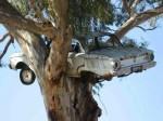 falcon-nesting-in-tree9