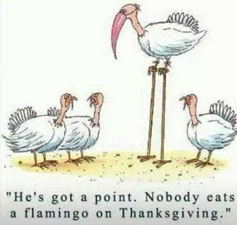 Thanksgiving Evader? Flamingo24