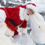 funny-santa-animal-cute