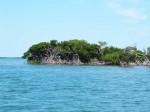 howe-mangrove2-00