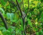 iguana-dead21