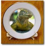 iguana-plate6