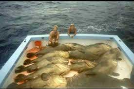 jewfish24