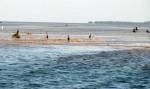 low-tide15