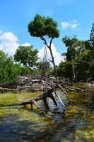 mangrove-swamp-content00