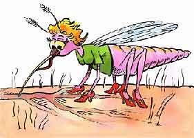 mosquito-people-female