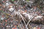 palmetto-dead-(2)