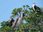 picnic-birds-mangrove00