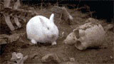 rabbit23