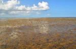 seaweed-cloud63kb