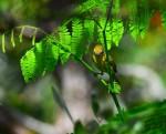 warbler-yellow3-00