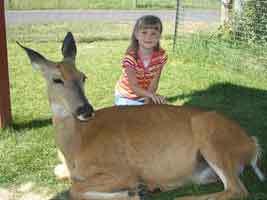 zoo-deer-small